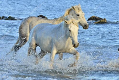 white-horses-running