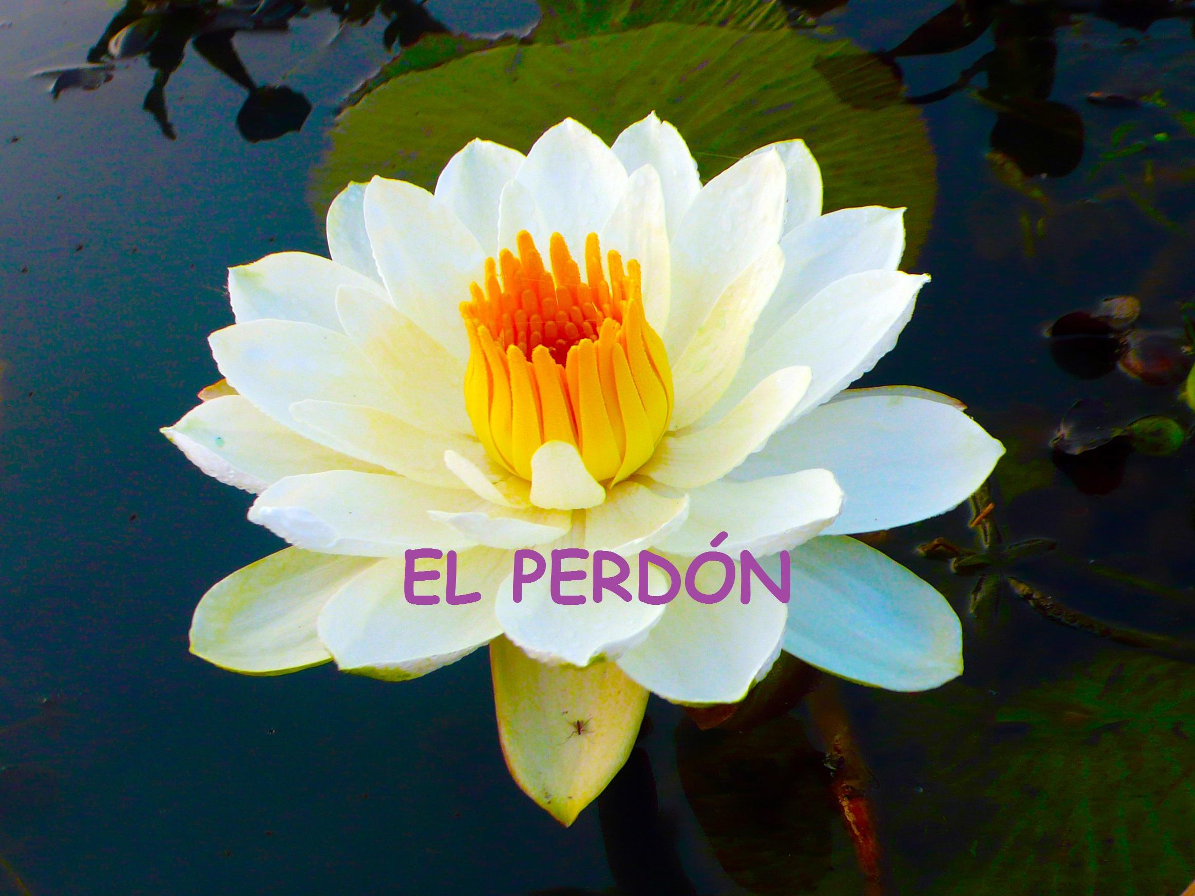 Flor_de_loto